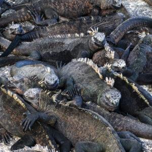 Overcrowded, Galapagos