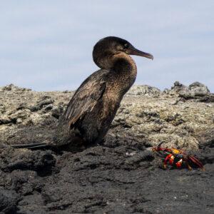 Sunbathing, Galapagos