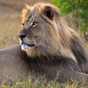 Like a king, Lower Zambezi National Park