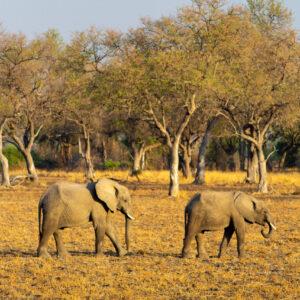 Elephants, Lower Zambezi National Park