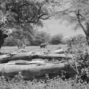 Painting, Serengeti