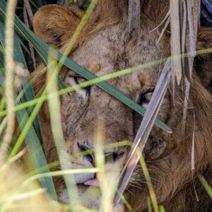 Hide and seek, Murchison Falls National Park