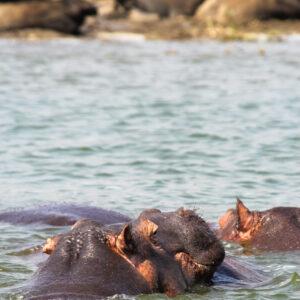 Cooling down, Nationaal park Queen Elizabeth