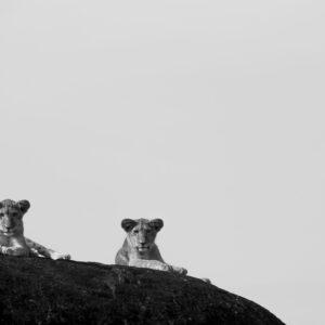 Future Kings, Kidepo Valleys National Park