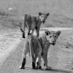 Where's mom, Kidepo Valleys National Park